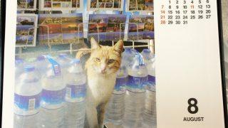 ネコよけにペットボトルが通用しない決定的瞬間を収めた写真発見