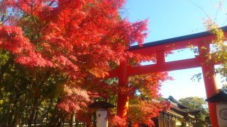 京都の紅葉、見ごろは11月中旬ですね