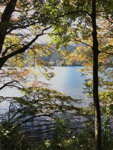 箱根紅葉 2016年11月3日 3
