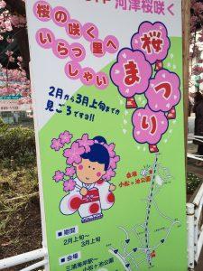 三浦海岸桜まつり 看板