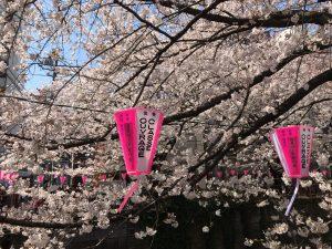 目黒川 桜4