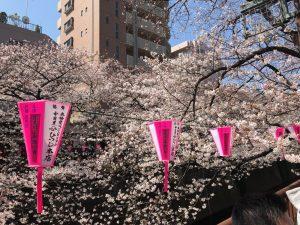 目黒川 桜2