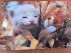 ベローチェの2020年2月の猫ファイルキャンペーン2